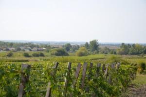 Vignoble Bordeaux Côtes de Blaye